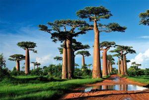 Fotografía de viaje - Madagascar