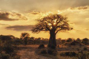Fotografía de viaje - Tanzania